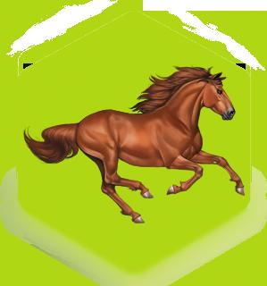 بیمه اسب